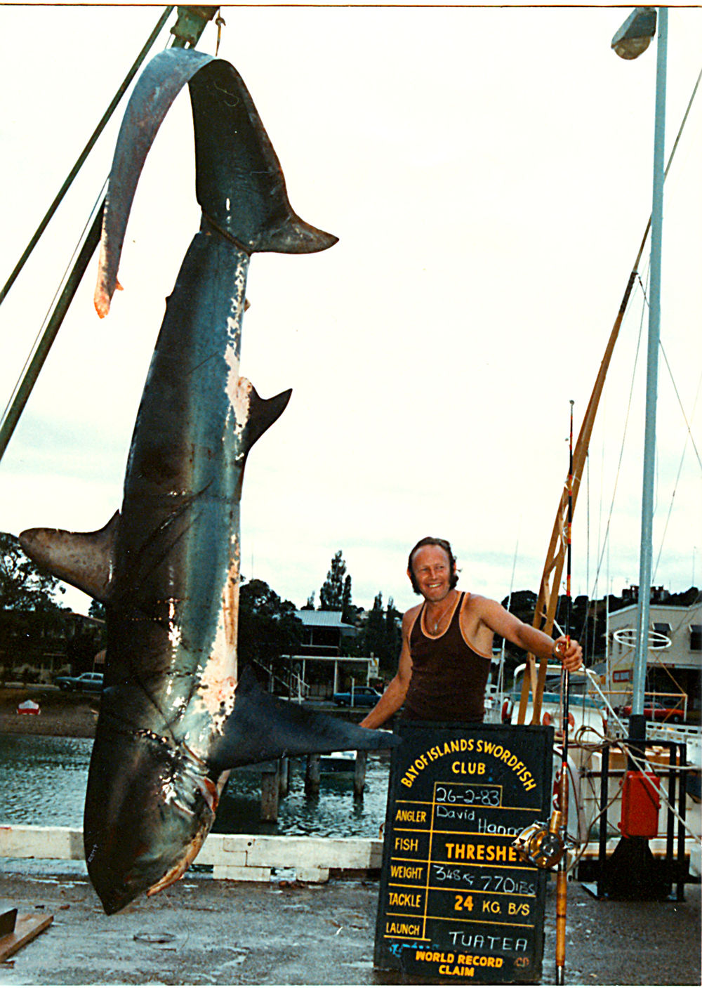World Record Thresher Shark!